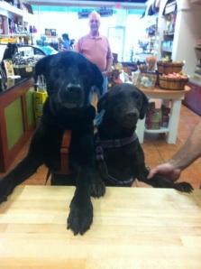 Guinness and Godiva visiting Three Dog Bakery