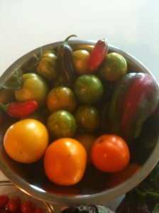 An assortment of 2012's spring tomatoes and peppers