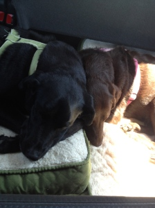 Guinness and Godiva in road trip mode, snoozing all the way to Toronto