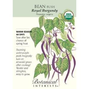 Purple beans!