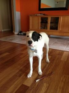 Meet Stella aka Gidget