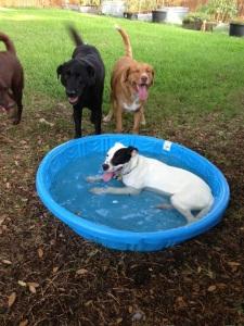 Gidget likes water