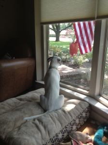 Gidget enjoys looking at the world passing by