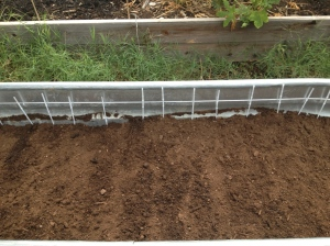 the seeds under the dirt, the recycled skewers mark the carrot rows