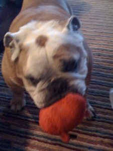 And squeaky toys! But any ball was her favorite toy.