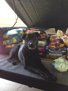 Duck Team 6 Volunteer Guinness taking guarding the donated dog food very seriously • photo by Bruce